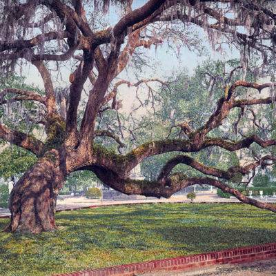 Live Oak in Magnolia Cemetery, Charleston, SC #53520